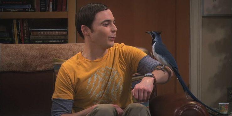 The-Big-Bang-Theory-ornitophobia-diffusion-Cropped.jpg (740×370)