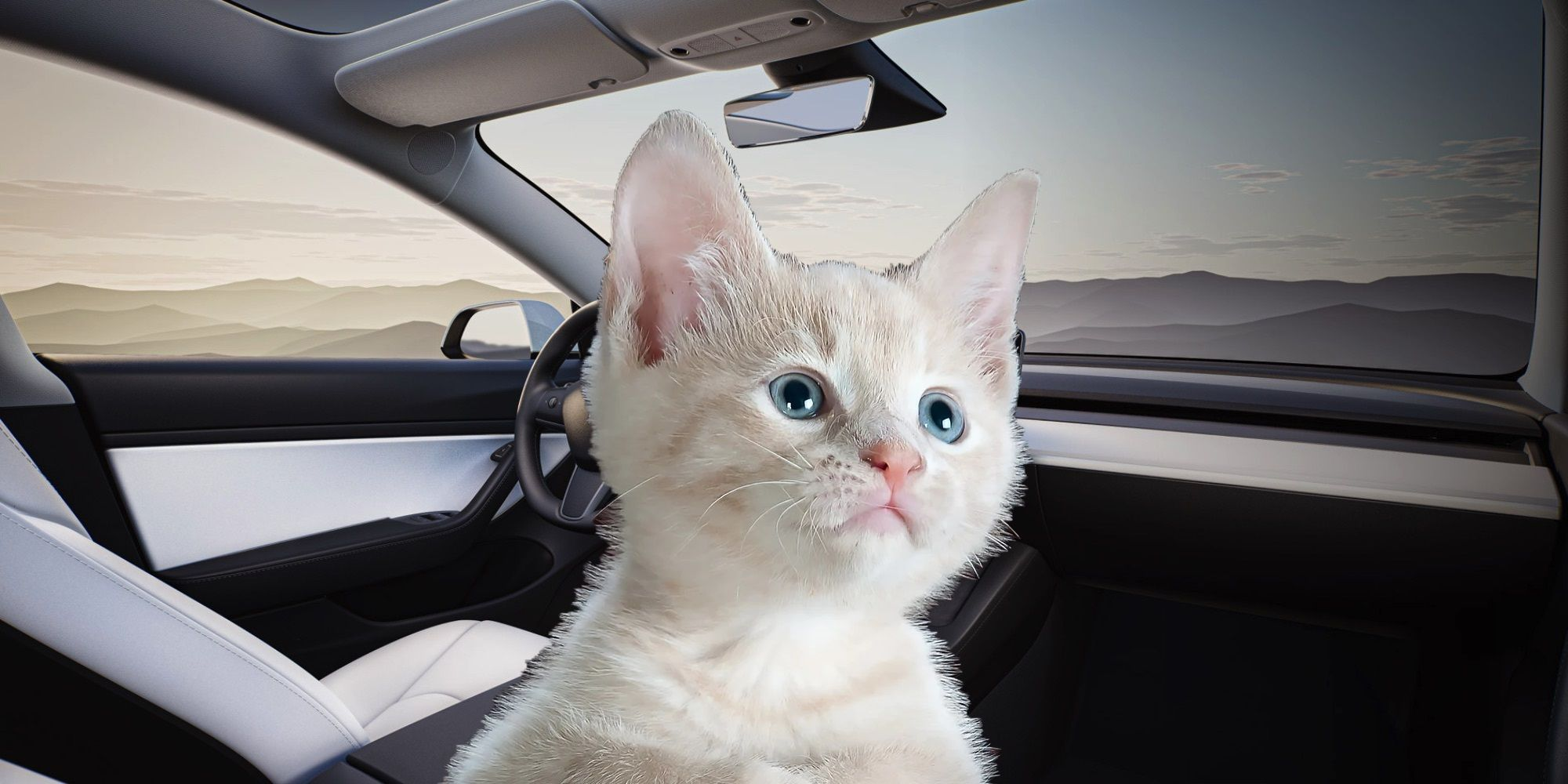 Why Elon Musk & Tesla Were Recently Blamed For Killing Cats