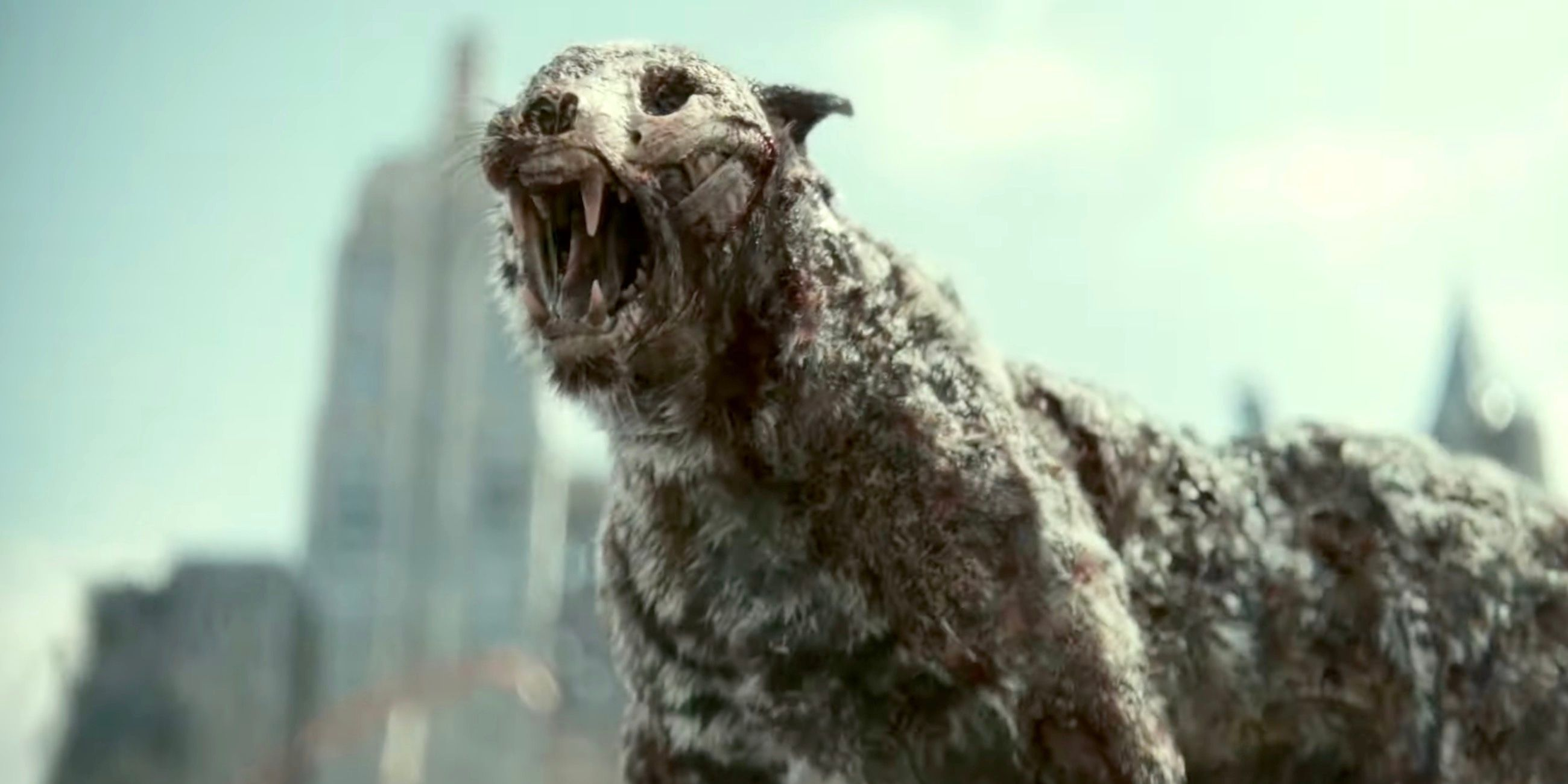 Why Zack Snyder's Army of the Dead Zombie Virus Doesn't Affect Birds